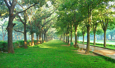 Walk The Line In Cubbon Park