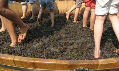 The Great Grape Stomp of 2013