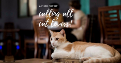 Floh Pop-Up: Calling All Cat Lovers!